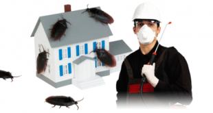 شركة مكافحة حشرات بعسفان