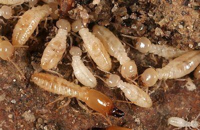 شركة مكافحة النمل الابيض بعسفان