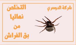 شركة مكافحة البق في جدة