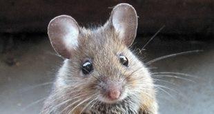 شركة مكافحة الفئران في الرياض