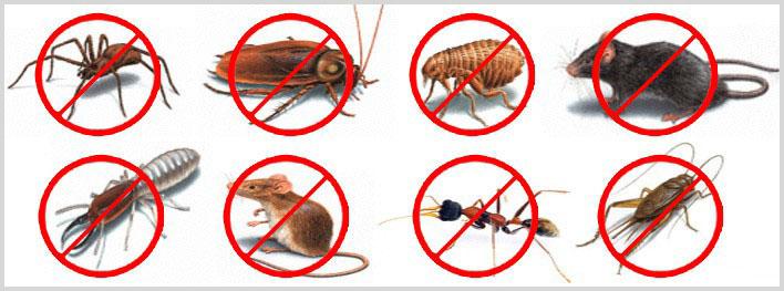 شركة حشرات بالخرج